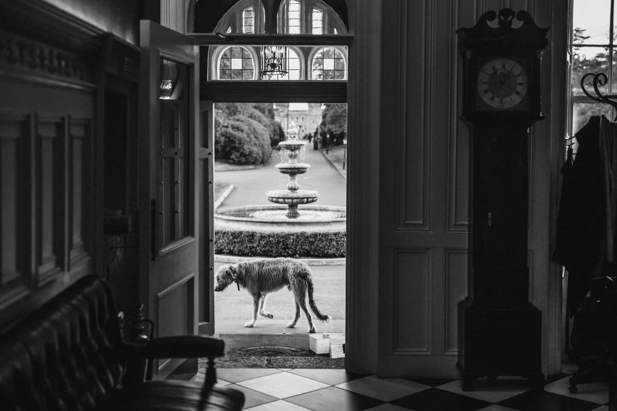 irish wolfhound at bellingham castle wedding
